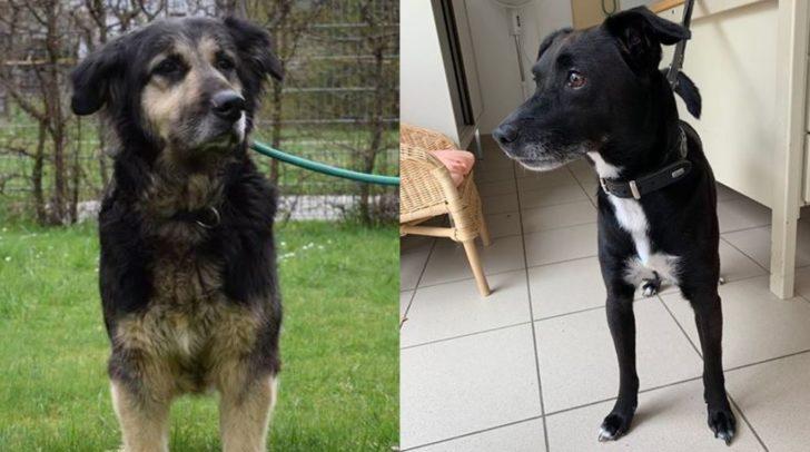 Die beiden Hunde leben zurzeit im TierheimVillach.