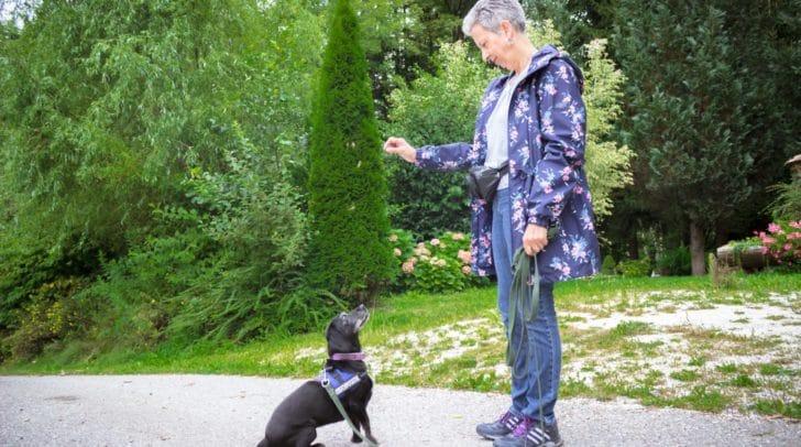 Im Laufe der Jahre kümmerte sich die Tierpatin bereits um 22 Hunde aus dem TiKo.