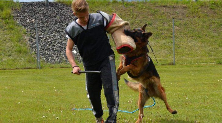 Hunde aller Rassen können am Trainingsplatz in den Bereichen Unterordnung, Fährte, Schutzdienst und für die Schau ausgebildet werden.