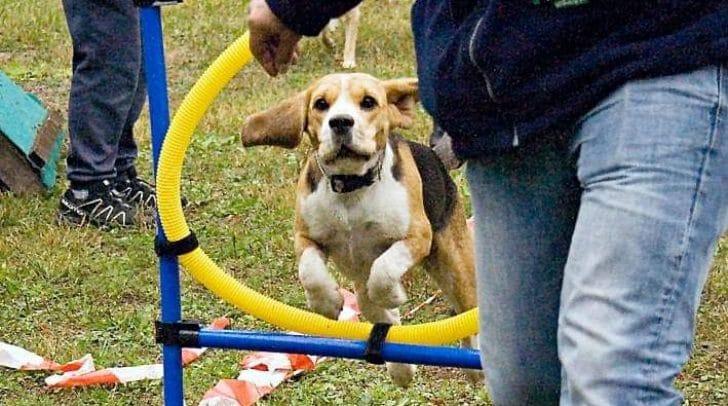 Bei dem Hunderennen sind Hunde jeden Alters und jeder Rasse willkommen. Gestartet wird in drei Klassen. Der schnellste Hund gewinnt.