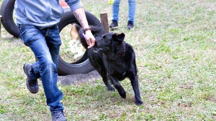 Gestartet wird beim Benefiz-Hunderennen auf einer Wiese. Danach können die Hunde in einem Hindernis-Parcours zeigen, was in ihnen steckt.