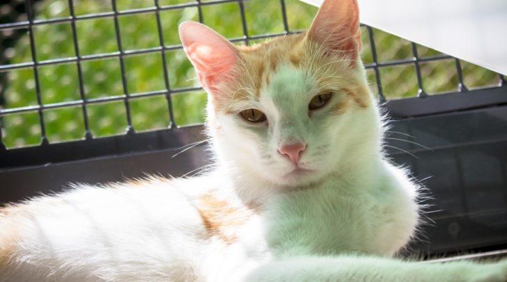 Möchtest du der unabhängigen Katzendame Lilo ein neues zu Hause geben?