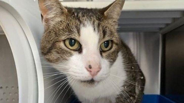 Dieser Katzer vermisst seine Besitzer! (c) Tierheim Villach