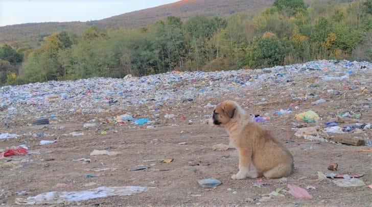 Die Niemandshunde von Bihać leben auf einer Mülldeponie unter schwierigsten Bedingungen.