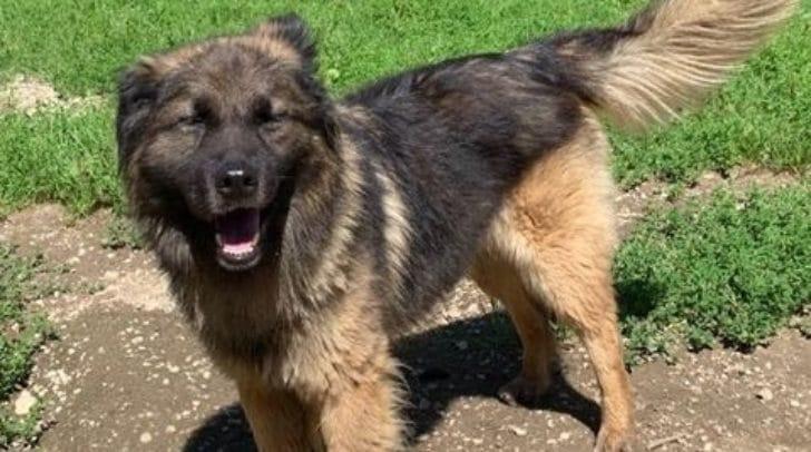 Wolfi sollte als Einzelhund gehalten werden.