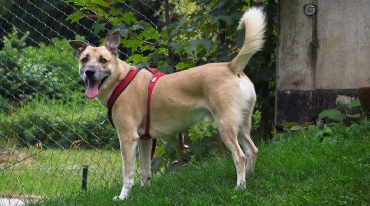 Sparky ist ein aktiver Hund, der gerne mit euch wandern gehen würde.