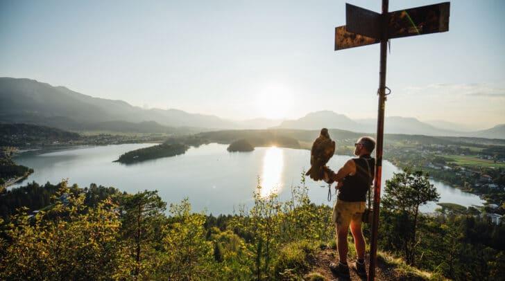 Falkner Franz Schüttelkopf mit Steinadler auf der Taborhöhe am Faaker See kurz vor dem Abflug.