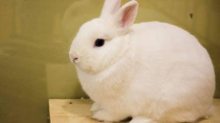 Das Kaninchen gilt als absolute Rarität.