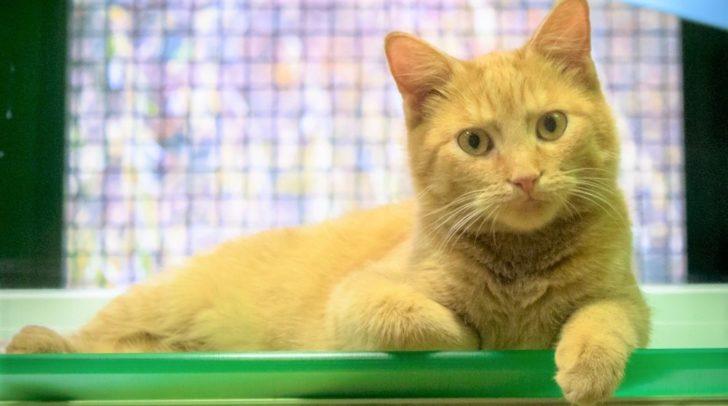 Kätzchen Nox erkundet verspielt seine Welt.