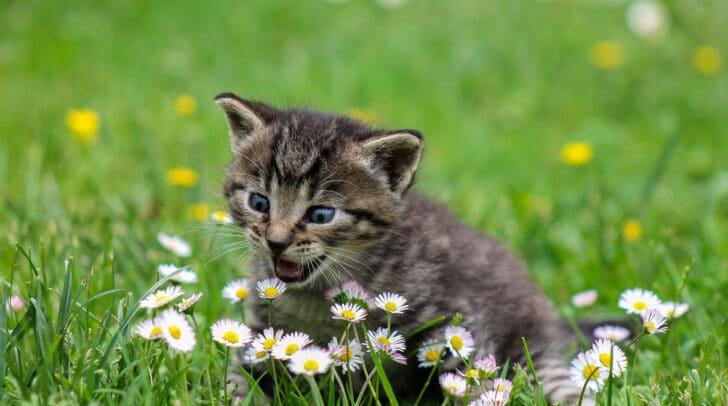 Im Jahr 2002 wurde der Weltkatzentag ins Leben gerufen.