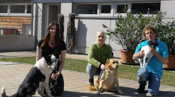 Das 7-köpfige Team des Tierheim Villach steht weiterhin im Einsatz für die Vierbeiner.