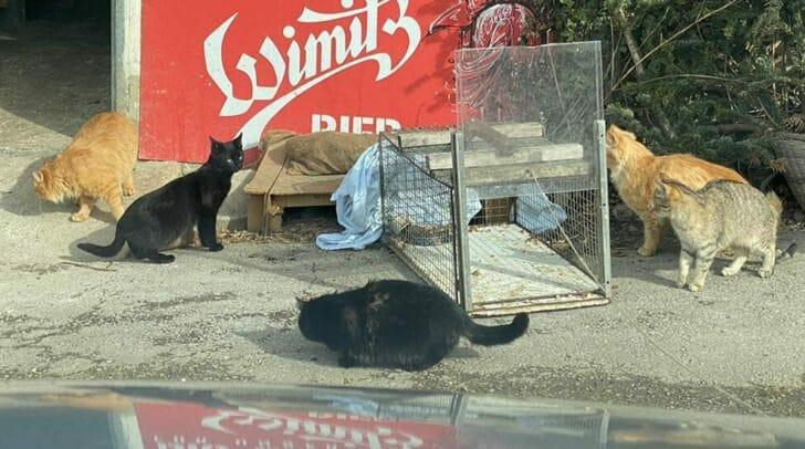 Tierschutz aktiv Kärnten setzt sich aktiv für die Kastration von Streunerkatzen ein.
