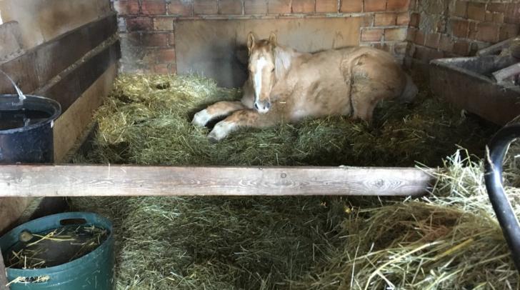 17 Jahre lang hatte man das Pferd in der Garage eingeschlossen. Seine Retterfamilie bescherte ihm ein neues Leben.