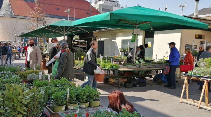 Die Gärtnereien bieten ihre Waren ab sofort wieder täglich auf dem Benediktinermarkt in Klagenfurt an.