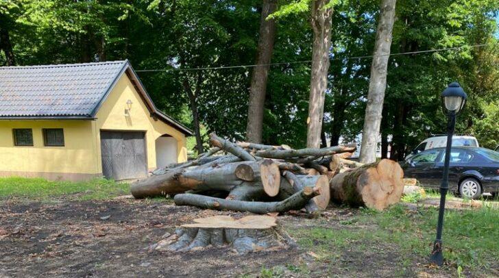 Die Schlägerung einer alten Buche im Garten des Herbertstöckls am St. Veiter Ring war für Stadtrat Frank Frey Anlass genug, ein Baumschutzgesetz vom Land Kärnten zu fordern.