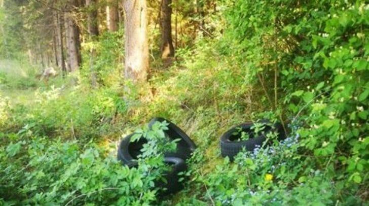 Die Reifen wurden einfach achtlos in den Wald geworfen.