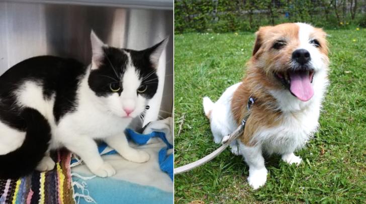 Die beiden Fellnasen sind zurzeit im Tierheim Villach untergebracht.