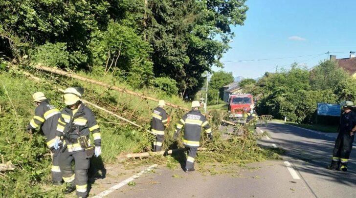 Ein Baum ist auf die Villacher Straße gefallen.