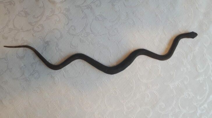 """""""Anhand des Bildes ließ sich nicht sagen, welche Schlange es war."""""""