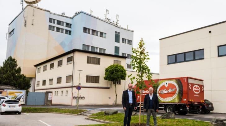 Braumeister Manuel Düregger und Thomas Santler, regionaler Verkaufsdirektor, begutachten den neu gepflanzten Baum bei der Brauerei in Villach.