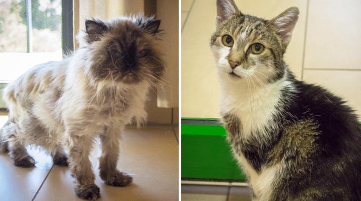 Die beiden Katzen sind auf der Suche nach einem neuen Zuhause.
