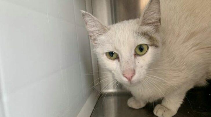 Die Katze wurde am 9. Juni in Villach aufgefunden und vermisst ihre Besitzer.