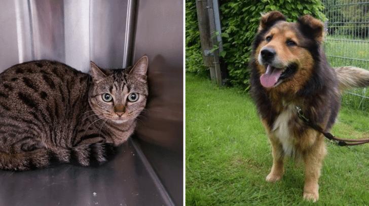 Die Fundkatze (l.) und Medo (r.) befinden sich derzeit im Kärntner Tierschutzverein Villach.