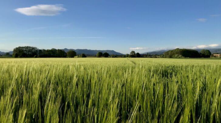 Die sommerlich heißen Tage im September werden immer häufiger, wie Daten der ZAMG zeigen.