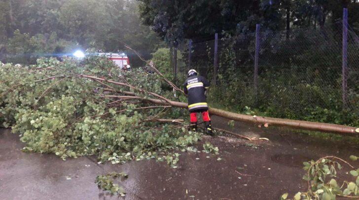 Umgestürzte Bäume, wie bei einem der heutigen Einsätze der FF Haidach, sind nach den heutigen Gewittern in vielen Teilen Kärntens zu sehen.