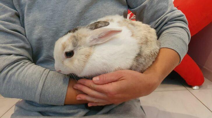 Eine Autofahrerin entdeckte das Kaninchen bei einem Villacher Truckstop und verständigte die Tierschützer.
