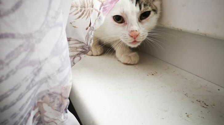 Diese kleine Katze wurde in letzter Sekunde aus der Jauchengrube gerettet. Sie ist nun die aufgeweckteste Katze von allen.