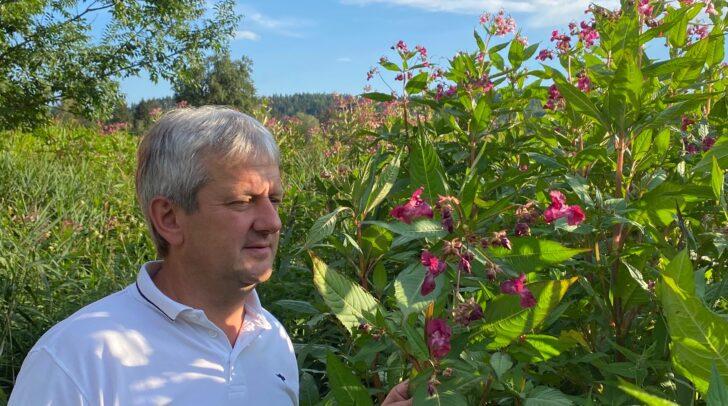 Seppi Krammer sagt den eingeschleppten Pflanzen den Kampf an