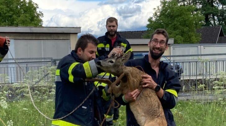 Das Tier konnte wohlbehalten aus dem Kraftwerkskanal geborgen werden.
