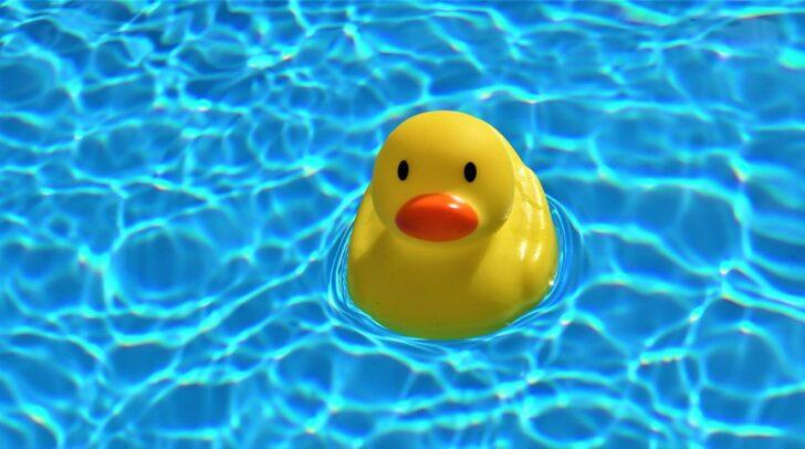Auch durch Vögel können Keime ins Wasser gelangen.
