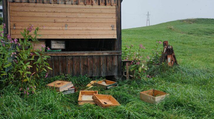 Um an den Honig zu gelangen, hat der Bär die Bienenhütte beschädigt.