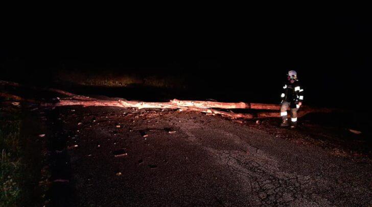 Der umgestürzte Baum blockierte die Altfinkensteiner Straße in Latschach.