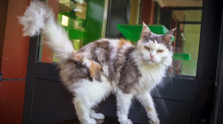 Katze Camilla sucht einen Kuschelplatz fürs Leben.