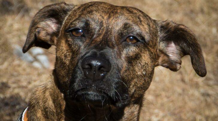 Das ist Pippi. Sie wurde Opfer eines Pfefferspray-Angriffs.