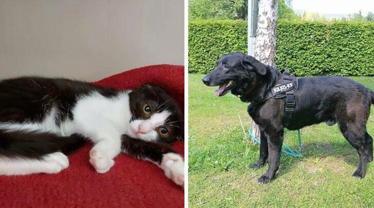 Die beiden warten im Tierheim Villach auf ein neues Zuhause.