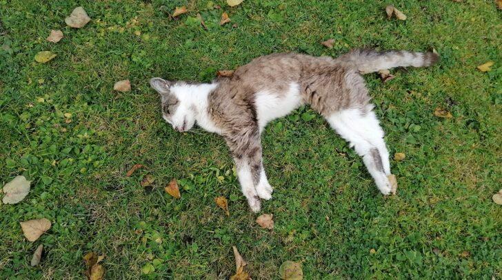 Eine 5-Minuten-Leserin fand gestern die stark geschwächte Katze in ihrem Garten und informierte die Tierrettung.