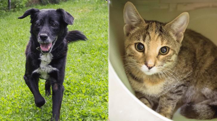 Labrador Mischling Blacky und Kätzin Heike warten im TiKo auf ein neues Zuhause.