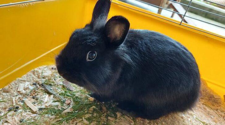Dieses Kaninchen wartet im Tierheim Villach auf seine Besitzer.