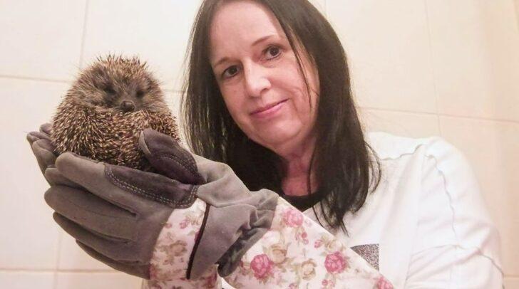 """Petra Röttig mit Pfauchi. Ihr Tipp: """"Beim Anfassen immer Handschuhe tragen. Igel können kräftig zubeißen."""""""