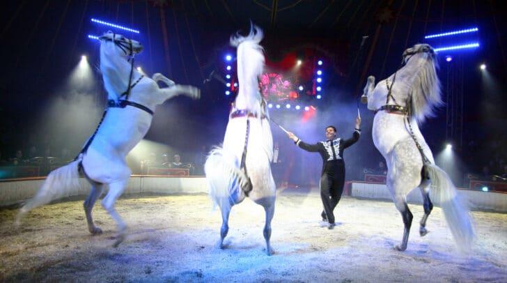 Für die ganze Familie: Noch bis 8. November kannst du den Circus Louis Knie in Villach am Wasenboden besuchen.
