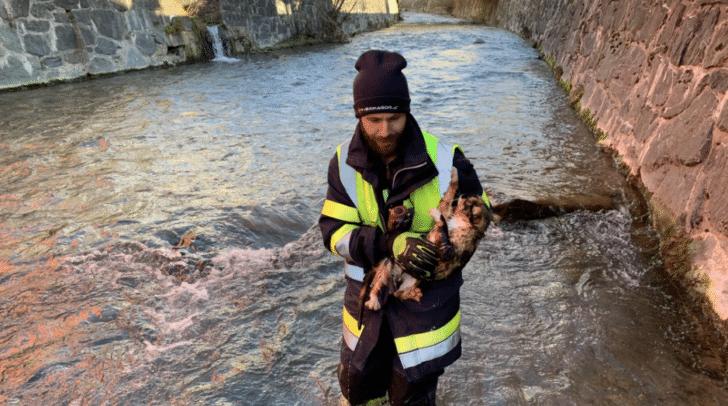 Die Kameraden der FF Hermagor holten die Katze aus dem Flussbett.