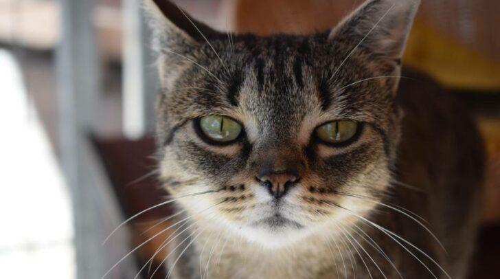 """Katze """"Trudi"""""""
