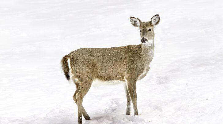 Weil sich die Tiere von den Wanderern gestört fühlen, werden sie nachtaktiv und können schwerer bejagt werden.