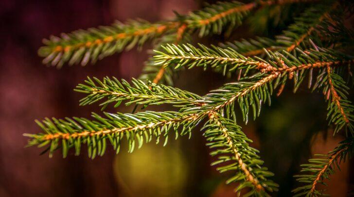 Mit Zweigen wichsen die Kinder frisch und g'sund.