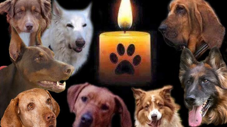 Diese Rettungshunde werden immer in Erinnerung bleiben.