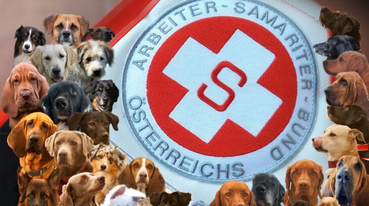 Die Vierbeiner der Rettungshundestaffel.